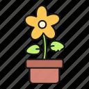 flower, pot, nature