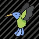 hummingbird, bird, animal, nature