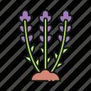 lavender, plant, flower, nature