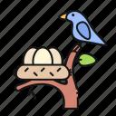 nest, bird, egg, nature