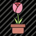 tulip, nature, flower, pot
