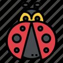 ladybug, insect, bug, animal, graden, spring