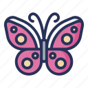 butterfly, spring, plant, nature, season, natural