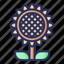 sun, flower, spring, plant, nature, season, natural