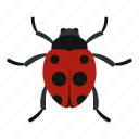 beetle, cute, insect, ladybird, ladybug, nature, summer icon