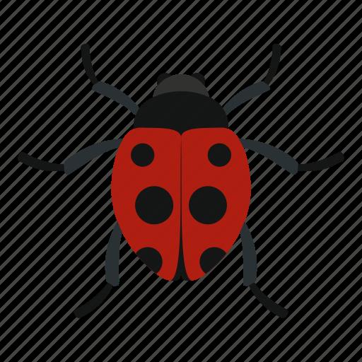 beetle, cute, insect, ladybird, ladybug, nature, summer icon