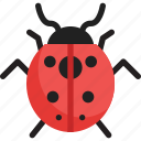 fly, insect, ladybug, spring