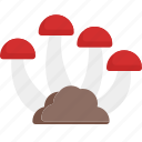food, mushroom, nature, vegetable