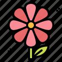 flowers, gardening, nature, plant