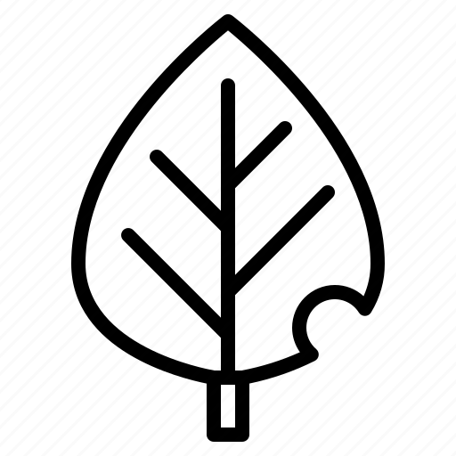 botanical, leaf, leave, plant icon