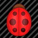 bug, insect, ladybird, ladybug icon