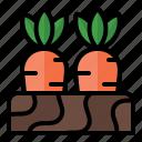 spring, season, nature, farm, harvest, carrot