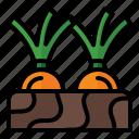 spring, season, nature, farm, harvest, shallot, onion