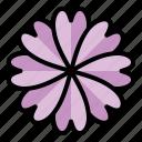 spring, season, nature, flower, pot, vase