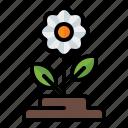 spring, season, nature, gardening, plant, flower
