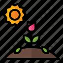 spring, season, nature, tulip, hill, sun