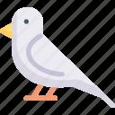 animal, bird, dove, nature, season, spring, weather