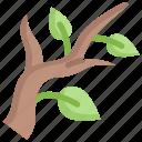 branch, leaf, nature, season, spring, tree, weather