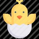 animal, bird, chick, nature, season, spring, weather