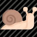 animal, nature, season, slug, snail, spring, weather