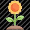 floral, flower, nature, season, spring, sunflower, weather