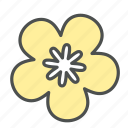blossom, flower, nature, ochna, spring, star icon