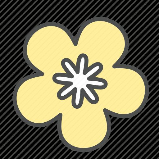 blossom, flower, nature, ochna, spring, star icon