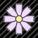 blossom, cosmos, daisy, flower, nature, spring