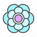anenome, blossom, flower, nature, spring icon