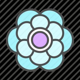 anenome, blossom, flower, nature, spring icon