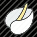 anthurium, blossom, flower, laceleaf, nature, spring, tailflower icon