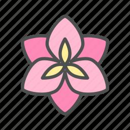 amaryllis, blossom, flower, nature, spring icon