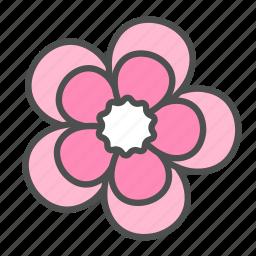 blossom, flower, geranium, nature, spring icon