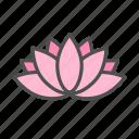 blossom, flower, lotus, nature, spring