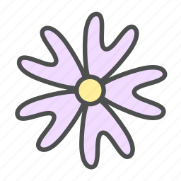 bifida, blossom, flower, nature, phlox, spring icon