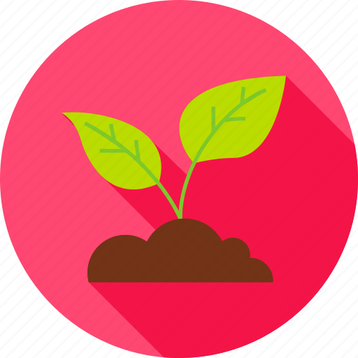 Cultivation, garden, leaf, nature, plant, spring, sprout icon - Download on Iconfinder