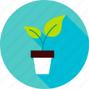 foliage, garden, leaf, nature, plant, pot, spring icon