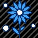 ecology, flower, nature, sunflower