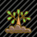 nature, plant, seed, tree