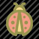 ladybug, ladybird, beetle, insect