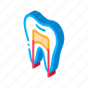 dental, dentist, health, medical, medicine, ray, x