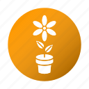 education, flower, school, spring, study icon