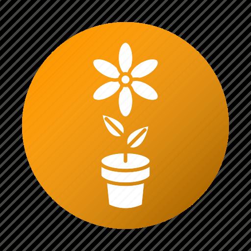 education, flower, school, spring, study icon