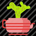 cactus, flower, plant, pot, succulent, vas