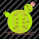cactus, plant, pot, round, succulent, vas