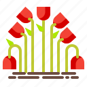 cactus, flower, plant, rose, succulent, thanksgiving