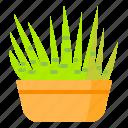 cactus, plant, pot, succulent, vas, zebra