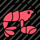 claw, crab, gourmet, lobster, seafood, sealife, shellfish
