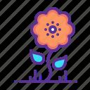 bloom, blossom, flower, spring, summer, sunflower, hygge