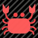 animal, cooking, crab, food, kitchen